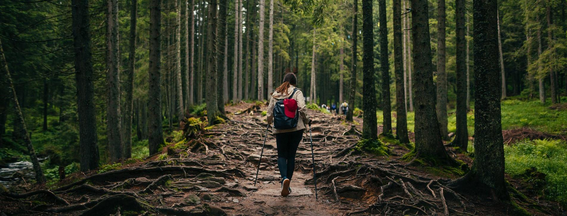 Фото - Сходження на Говерлу